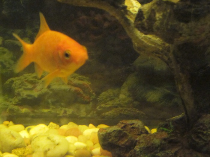 Facing Fears: Fish aren'tFriends